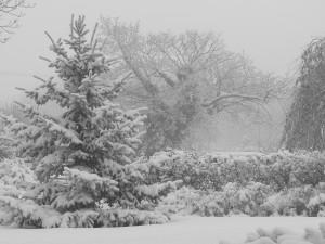 winter 10 074